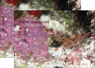 imprimer affiche poisson et crustace crevette crustace animal MIF39018