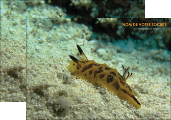 personnaliser modele de affiche animal crevette crustace animal MIF40120