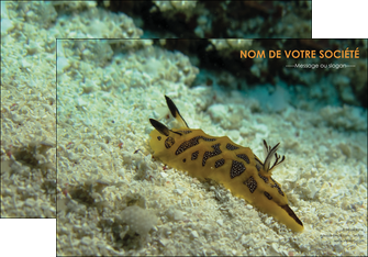 faire modele a imprimer affiche animal crevette crustace animal MIF40138